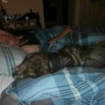 My Crazy Pets!