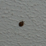 Invasion of the Lady Bugs! AHHHHHHHHHHH!!!! #KillLadyBugs