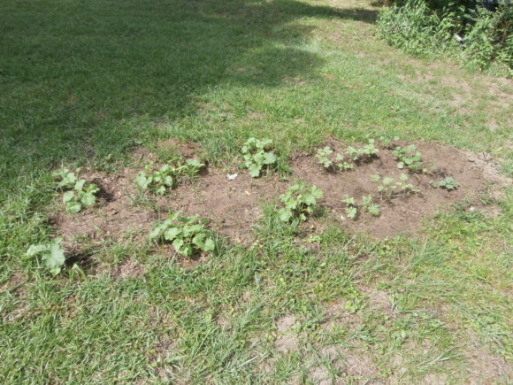 Look How Good My Garden Is Growing! #RealFood #Garden #FreshVeggies