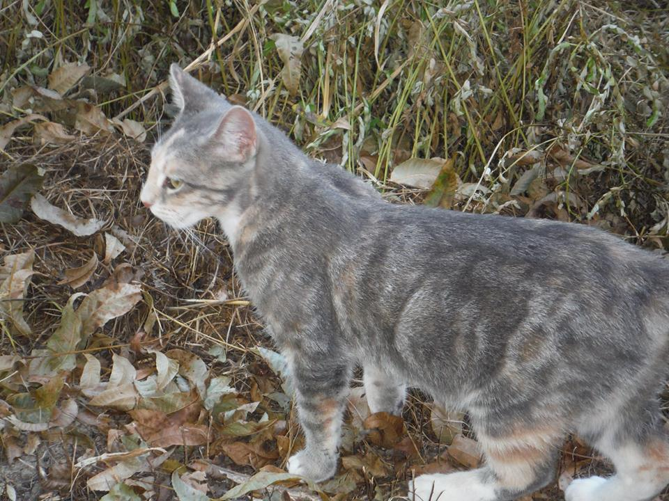 This Little Beauty Showed Up Out Here! #Kitten #WildCats #Cats